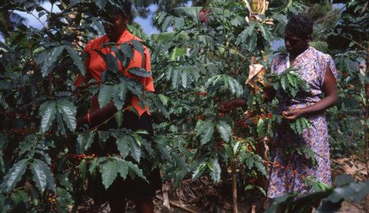 コーヒー農園と自然の恵みの関係を知る