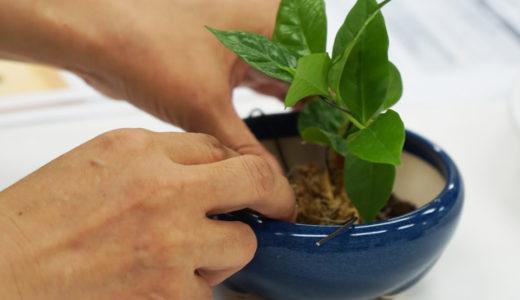 【珈作しよう】愛らしい「コーヒー盆栽」作りに挑戦
